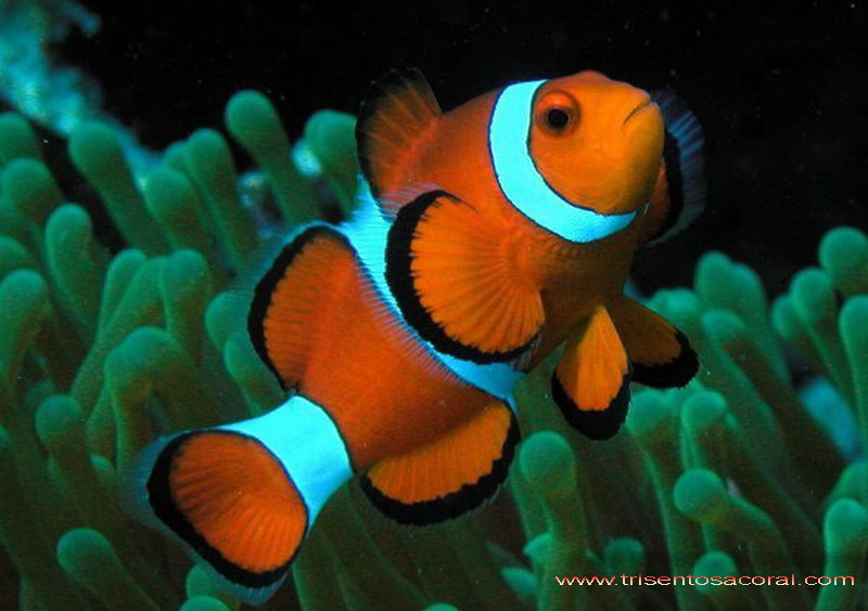 Fish for Clown fish care